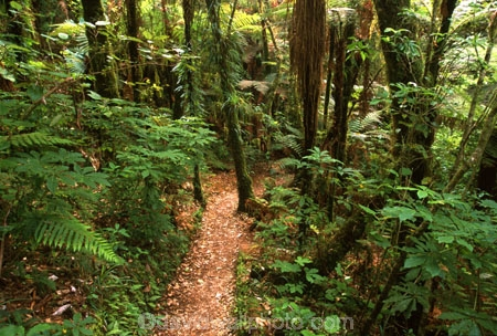 fern;ferns;flora;forest;forestry;forests;green;hike;hiking;lush;native-bush;outdoor;outdoors;track;tracks;undergrowth;walk;walking