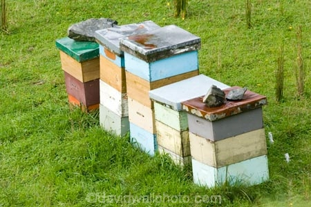 agricultural;agriculture;bee-hive;bee-hives;beehives;bees;country;countryside;farm;farming;farmland;farms;field;fields;honey;horticulture;King-Country;meadow;meadows;N.I.;N.Z.;New-Zealand;NI;North-Island;NZ;paddock;paddocks;Paparata-Saddle;pasture;pastures;pollinating;pollination;rural