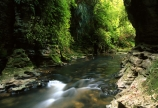 creek;creeks;fern;ferns;flora;forest;forestry;forests;green;hike;hiking;lush;native-bush;outdoor;outdoors;streams;track;tracks;undergrowth;walk;walking;watercourse