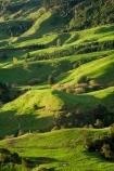 agricultural;agriculture;country;countryside;farm;farming;farmland;farms;field;fields;green;King-Country;Mapara-Stream;meadow;meadows;N.I.;N.Z.;New-Zealand;NI;North-Island;NZ;paddock;paddocks;pasture;pastures;rural;Te-Kuiti;Waikato-Region