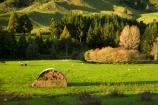 agricultural;agriculture;autuminal;autumn;autumn-colour;autumn-colours;autumnal;color;colors;colour;colours;country;countryside;deciduous;fall;farm;farming;farmland;farms;field;fields;green;hay;hay-barn;hay-barns;hay-shed;hay-sheds;hay-stack;hay-stacks;haystack;haystacks;King-Country;leaf;leaves;Mapara-Stream;meadow;meadows;N.I.;N.Z.;New-Zealand;NI;North-Island;NZ;paddock;paddocks;pasture;pastures;rural;season;seasonal;seasons;sheep;Te-Kuiti;tractor;tractors;tree;trees;Waikato-Region