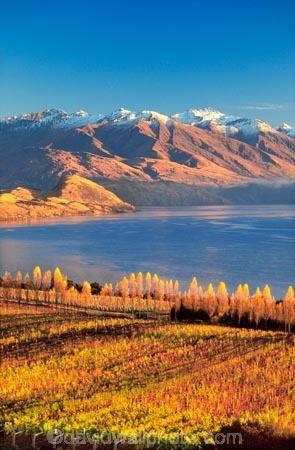 autumn;color;colors;colour;colours;crop;crops;cultivation;fall;farm;farming;farms;field;fields;grape;grapes;grapevine;horticulture;lake;lakes;leaf;leaves;mountain;mountains;n.z;n.z.;new-zealand;nz;otago;row;rows;rural;vine;vine,-vines,-vineyard,-vineyards,-wine,-wines,-winery,-wineries,;vines;vineyard;vineyards;vintage;wine;wineries;winery;wines