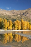 autuminal;autumn;autumn-colour;autumn-colours;autumnal;calm;Central-Otago;color;colors;colour;colours;deciduous;fall;golden;lake;Lake-Wanaka;lakes;leaf;leaves;N.Z.;New-Zealand;NZ;Otago;placid;poplar;poplar-tree;poplar-trees;poplars;quiet;reflection;reflections;S.I.;season;seasonal;seasons;serene;SI;smooth;South-Is.;South-Island;Southern-Lakes;Southern-Lakes-District;Southern-Lakes-Region;still;tranquil;tree;trees;Wanaka;water;yellow