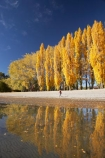 autuminal;autumn;autumn-colour;autumn-colours;autumnal;calm;Central-Otago;color;colors;colour;colours;deciduous;fall;female;girl;girls;golden;lake;Lake-Wanaka;lakes;leaf;leaves;N.Z.;New-Zealand;NZ;Otago;people;person;persons;placid;poplar;poplar-tree;poplar-trees;poplars;quiet;reflection;reflections;S.I.;season;seasonal;seasons;serene;SI;smooth;South-Is.;South-Island;Southern-Lakes;Southern-Lakes-District;Southern-Lakes-Region;still;tranquil;tree;trees;Wanaka;water;woman;women;yellow