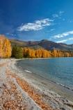 autuminal;autumn;autumn-colour;autumn-colours;autumnal;Central-Otago;color;colors;colour;colours;deciduous;fall;gold;golden;lake;Lake-Wanaka;lakes;leaf;leaves;Mount-Alpha;Mt-Alpha;Mt.-Alpha;N.Z.;New-Zealand;NZ;Otago;poplar;poplar-tree;poplar-trees;poplars;S.I.;season;seasonal;seasons;SI;South-Is.;South-Island;Southern-Lakes;Southern-Lakes-District;Southern-Lakes-Region;Sth-Is;tree;trees;Wanaka;water;yellow