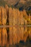 autuminal;autumn;autumn-colour;autumn-colours;autumnal;calm;Central-Otago;color;colors;colour;colours;deciduous;fall;gold;golden;lake;Lake-Wanaka;lakes;leaf;leaves;N.Z.;New-Zealand;NZ;Otago;people;person;photographer;photographers;placid;poplar;poplar-tree;poplar-trees;poplars;quiet;reflected;reflection;reflections;S.I.;season;seasonal;seasons;serene;SI;smooth;South-Is.;South-Island;Southern-Lakes;Southern-Lakes-District;Southern-Lakes-Region;Sth-Is;still;tourism;tourist;tourists;tranquil;tree;trees;Wanaka;water;yellow