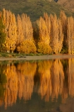 autuminal;autumn;autumn-colour;autumn-colours;autumnal;calm;Central-Otago;color;colors;colour;colours;deciduous;fall;gold;golden;lake;Lake-Wanaka;lakes;leaf;leaves;N.Z.;New-Zealand;NZ;Otago;placid;poplar;poplar-tree;poplar-trees;poplars;quiet;reflected;reflection;reflections;S.I.;season;seasonal;seasons;serene;SI;smooth;South-Is.;South-Island;Southern-Lakes;Southern-Lakes-District;Southern-Lakes-Region;Sth-Is;still;tranquil;tree;trees;Wanaka;water;yellow