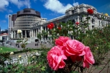 capital;government;governments;historical;historic;building;buildings;member;members;cabinet;mp;mps;columns;cabbage;tree;trees;prime;minister;parliament;wellington;capitals;beehive;rose;roses;flower;flowers;pink