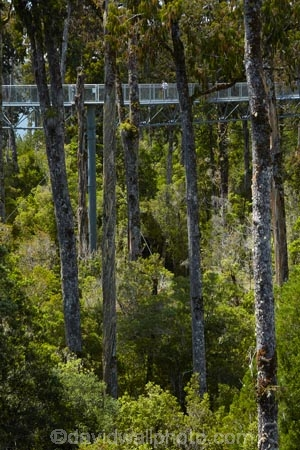 aerial-walkway;aerial-walkways;aerials-walkways;bridge;bridges;bush;canopy;canopy-walk;eco-tourism;ecotourism;elevated-walkway;elevated-walkways;engineering;forest;forest-canopy;forests;high;high-up;Hokitika;lush;luxuriant;N.Z.;native-bush;native-forest;native-forests;native-tree;native-trees;native-woods;natural;nature;New-Zealand;NZ;plant;plants;rain-forest;rain-forests;rain_forests;rainforest;rainforest-canopy;rainforest-walk;rainforests;S.I.;SI;South-Is;South-Island;steel;Sth-Is;structure;structures;tourism;travel;tree;Tree-top-Walk;Tree-top-Walkway;tree-trunk;tree-trunks;Tree_top-Walk;Tree_top-Walkway;trees;Treetop-Walk;Treetop-Walkway;walkway;walkways;West-Coast;West-Coast-Treetop-Walk;West-Coast-Treetop-Walkway;Westland;wood;woods