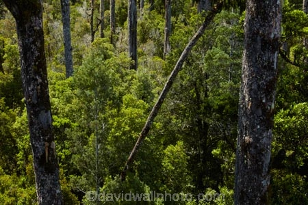 aerial-walkway;aerial-walkways;bush;forest;forests;Hokitika;N.Z.;native-bush;native-forest;native-forests;native-tree;native-trees;native-woods;natural;nature;New-Zealand;NZ;S.I.;SI;South-Is;South-Island;Sth-Is;tree;Tree-top-Walk;Tree-top-Walkway;Tree_top-Walk;Tree_top-Walkway;trees;Treetop-Walk;Treetop-Walkway;walkway;walkways;West-Coast;West-Coast-Treetop-Walk;West-Coast-Treetop-Walkway;Westland;wood;woods