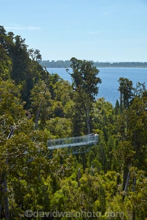 aerial-walkway;aerial-walkways;aerials-walkways;bridge;bridges;bush;canopy;canopy-walk;cantilever;cantilevers;eco-tourism;ecotourism;elevated-walkway;elevated-walkways;engineering;forest;forest-canopy;forests;high;high-up;Hokitika;Lake-Mahinapua;lush;luxuriant;M.R.;model-release;model-released;MR;N.Z.;native-bush;native-forest;native-forests;native-tree;native-trees;native-woods;natural;nature;New-Zealand;NZ;plant;plants;rain-forest;rain-forests;rain_forests;rainforest;rainforest-canopy;rainforest-walk;rainforests;S.I.;SI;South-Is;South-Island;steel;Sth-Is;structure;structures;tourism;travel;tree;Tree-top-Walk;Tree-top-Walkway;tree-trunk;tree-trunks;Tree_top-Walk;Tree_top-Walkway;trees;Treetop-Walk;Treetop-Walkway;walkway;walkways;West-Coast;West-Coast-Treetop-Walk;West-Coast-Treetop-Walkway;Westland;wood;woods