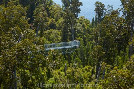 aerial-walkway;aerial-walkways;aerials-walkways;bridge;bridges;bush;canopy;canopy-walk;cantilever;cantilevers;eco-tourism;ecotourism;elevated-walkway;elevated-walkways;engineering;forest;forest-canopy;forests;high;high-up;Hokitika;lush;luxuriant;M.R.;model-release;model-released;MR;N.Z.;native-bush;native-forest;native-forests;native-tree;native-trees;native-woods;natural;nature;New-Zealand;NZ;plant;plants;rain-forest;rain-forests;rain_forests;rainforest;rainforest-canopy;rainforest-walk;rainforests;S.I.;SI;South-Is;South-Island;steel;Sth-Is;structure;structures;tourism;travel;tree;Tree-top-Walk;Tree-top-Walkway;tree-trunk;tree-trunks;Tree_top-Walk;Tree_top-Walkway;trees;Treetop-Walk;Treetop-Walkway;walkway;walkways;West-Coast;West-Coast-Treetop-Walk;West-Coast-Treetop-Walkway;Westland;wood;woods