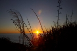 Buller-District;Buller-Region;camera-flare;Cape-Foulwind;Cape-Foulwind-Walkway;coast;coastal;coastline;coastlines;coasts;dusk;evening;flare;flax;flower-heads;foreshore;lens-flare;N.Z.;New-Zealand;nightfall;NZ;ocean;orange;S.I.;sea;seed-heads;shore;shoreline;shorelines;shores;SI;sky;South-Is;South-Island;sunset;sunsets;Tasman-Sea;toetoe;twilight;water;West-Coast;Westland