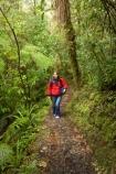 beautiful;beauty;bush;endemic;fern;ferns;forest;forests;green;hike;hiker;hikers;hiking;Kahurangi-National-Park;Karamea;lush;native;native-bush;natives;natural;nature;New-Zealand;Nothofagus;Oparara-Arch;Oparara-Basin;people;person;ponga;pongas;punga;pungas;rain-forest;rain-forests;rain_forest;rain_forests;rainforest;rainforests;scene;scenic;South-Island;southern-beeches;timber;Track;tracks;tree;tree-fern;tree-ferns;tree-trunk;tree-trunks;trees;trunk;trunks;verdant;walker;walkers;walking;walking-track;walking-tracks;West-Coast;Westland;wood;woods