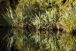 Blue-River;calm;flax;flaxes;lake;Lake-Moeraki;lakes;Moeraki-River;n.z.;native;native-bush;natural;natural-scenery;nature;new-zealand;nz;phormium;phormium-sp;placid;quiet;reflection;reflections;river;rivers;S.I.;scene;serene;SI;smooth;South-Island;still;tranquil;water;west-coast;westland