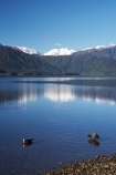 alp;alpine;alps;calm;duck;ducks;lake;Lake-Kaniere;lakes;main-divide;mount;Mount-Ambrose;mountain;mountain-peak;mountainous;mountains;mountainside;mt;Mt-Ambrose;mt.;Mt.-Ambrose;N.Z.;New-Zealand;NZ;placid;quiet;range;ranges;reflection;reflections;S.I.;serene;SI;smooth;snow;snow-capped;snow_capped;snowcapped;snowy;South-Is.;South-Island;southern-alps;still;Sunny-Bight;tranquil;water;Wesl-Coast;Westland
