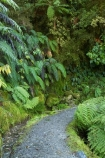 beautiful;beauty;bush;cyathea;endemic;fern;ferns;footpath;footpaths;forest;forests;frond;fronds;green;Lake-Matheson;N.Z.;native;native-bush;natives;natural;nature;New-Zealand;NZ;ponga;pongas;punga;pungas;rain-forest;rain-forests;rain_forest;rain_forests;rainforest;rainforests;S.I.;scene;scenic;SI;South-Is.;South-Island;track;tracks;tree-fern;tree-ferns;West-Coast;Westland