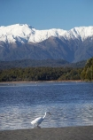 Animal;Animals;Aquatic-bird;Aquatic-birds;bird;birds;Egretta-alba;endangered;estuaries;estuary;fauna;feather;feathers;fly;flying;heron;herons;inlet;inlets;Kotuku;lagoon;lagoons;mountain;mountains;N.Z.;native;natives;natural;Nature;New-Zealand;NZ;Okarito-Lagoon;Ornithology;rare;S.I.;SI;snow-capped;South-Is.;South-Island;Southern-Alps;threatened;tidal;tide;Wading-bird;Wading-birds;water;West-Coast;Westland;white;White-Heron;Wild;Wildlife