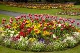 bloom;blooming;blooms;Britain;British-Isles;England;Europe;floral;flower;flower-garden;flower-gardens;flowerbed;flowerbeds;flowers;fresh;Friar-Gardens;Friary-Gardens;Friary-Memorial-Gardens;G.B.;garden;gardens;GB;Great-Britain;Greyfriars-Gardens;grow;growth;North-Yorkshire;Northern-England;park;parks;renew;Richmond;Richmond-Gardens;season;seasonal;seasons;spring;springtime;tulip;tulips;U.K.;UK;United-Kingdom;Yorkshire;Yorkshire-Dales