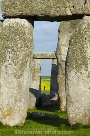 2500-BC;ancient-monument;ancient-monuments;ancient-stone-circle;Britain;Bronze-Age-monuments;circle-of-bluestones;circle-of-sarsen-stones-with-lintels;crop;crops;England;English-heritage;G.B.;GB;Great-Britain;heritage;historic;historic-place;historic-places;historic-site;historic-sites;historical;historical-place;historical-places;historical-site;historical-sites;history;horseshoe-of-sarsen-trilithons;National-Monument;Neolithic-monuments;old;people;person;plant;plants;prehistoric-monument;prehistoric-monuments;rape-field;rape-fields;rapeseed;rapeseed-field;rapeseed-fields;rapeseeds;rock-circle;rock-circles;Scheduled-Ancient-Monument;standing-stones;stone-circle;stone-circles;Stonehenge;tourist;tourists;tradition;traditional;U.K.;UK;UNESCO-World-Heritage-Area;UNESCO-World-Heritage-Site;United-Kingdom;Wiltshire;World-Heritage;World-Heritage-Area;World-Heritage-Areas;World-Heritage-Site;World-Heritage-Sites;yellow;yellow-field;yellow-fields