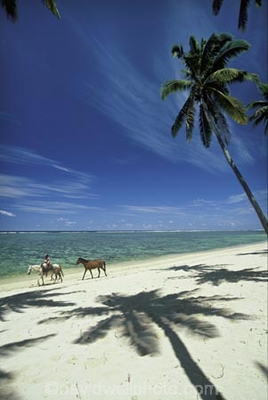 beach;beaches;calm;coast;coastline;coconut-palm;coconut-palms;coconut-tree;coconut-trees;cocos-nucifera;heavenly;holiday;holidays;horizon;horizons;horse;idyllic;island;islands;leisure;melanesia;ocean;outdoor;outdoors;outside;pacific;palm;palm-tree;palm-trees;palms;paradise;peaceful;plant;plants;quiet;relax;relaxing;rest;restful;ride;rider;sand;sandy;scenic;scenics;sea;serene;shadow;shadows;shore;shoreline;shores;still;summer;summertime;tranquil;travel;travels;tree;trees;tropical;vacation;vacations;vegetation;viti-levu;water;world-locations;world-travel