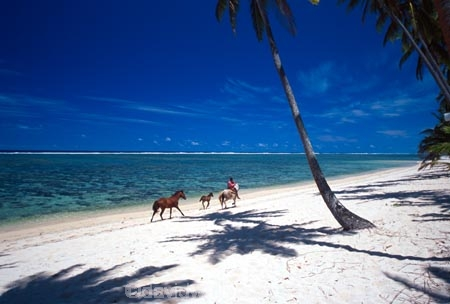 beach;beaches;coast;coastline;coconut-palm;coconut-palms;coconut-tree;coconut-trees;cocos-nucifera;heavenly;holiday;holidays;horizon;horizons;idyllic;island;islands;leisure;melanesia;ocean;outdoor;outdoors;outside;pacific;palm;palm-tree;palms;palm-trees;paradise;plant;plants;sand;sandy;scenic;scenics;sea;shadow;shadows;shore;shores;shoreline;summer;summertime;travel;travels;tree;trees;tropical;vacation;vacations;vegetation;viti-levu;water;world-locations;world-travel;horse;rider;ride;relax;relaxing;serene;peaceful;quiet;restful;rest;calm;tranquil;still