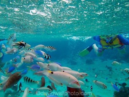 aqua;aquamarine;blue;child;children;clean-water;clear-water;coast;coastal;coasts;cobalt-blue;cobalt-ultramarine;cobaltultramarine;coral-reef;coral-reefs;dive;diver;divers;diving;Fij;Fiji;Fiji-Islands;fish;fishes;Halichoeres-trimaculatus;island;islands;kid;kids;Malolo-Lailai-Is;Malolo-Lailai-Island;Malololailai-Is;Malololailai-Island;Mamanuca-Group;Mamanuca-Is;Mamanuca-Island-Group;Mamanuca-Islands;Mamanucas;marine;marine-environment;marine-life;marinelife;ocean;oceanlife;Pacific;Pacific-Island;Pacific-Islands;people;person;Plantation-Is;Plantation-Is-Resort;Plantation-Island;Plantation-Island-Resort;reef;reefs;sea;sealife;snorkeller;snorkellers;snorkelling;South-Pacific;teal-blue;Three-spot-wrasse;Threespot-wrasse;tourism;tourist;tourists;tropical-fish;tropical-island;tropical-islands;tropical-reef;tropical-reefs;turquoise;under-water;under_water;undersea;underwater;underwater-photo;underwater-photography;underwater-photos;water