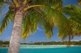 aqua;aquamarine;blue;clean-water;clear-water;coast;cobalt-blue;cobalt-ultramarine;cobaltultramarine;Fij;Fiji;Fiji-Islands;holiday;holiday-accommodation;holiday-resort;holiday-resorts;holidays;island;islands;lagoon;lagoons;Malolo-Lailai-Is;Malolo-Lailai-Island;Mamanuca-Group;Mamanuca-Is;Mamanuca-Island-Group;Mamanuca-Islands;Mamanucas;Musket-Cove-Island-Resort;Musket-Cove-Resort;Pacific;Pacific-Island;Pacific-Islands;palm;palm-frond;palm-fronds;palm-tree;palm-trees;palms;Ratu-Nemani-Island;resort;resort-hotel;resort-hotels;resorts;South-Pacific;teal-blue;tropical-island;tropical-islands;turquoise;vacation;vacations