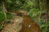 brook;brooks;Coral-Coast;creek;creeks;fern;ferns;Fij;Fiji-Islands;flora;flow;forest;forestry;forests;green;Korotogo;Kula-Eco-Park;Kula-Ecopark;lush;native-bush;outdoor;outdoors;Pacific;rainforest;rainforests;rainforrests;Sigatoka;South-Pacific;stream;streams;tourist-attraction;tourist-attractions;tree;trees;undergrowth;Viti-Levu;Viti-Levu-Island;water;watercourse;wet