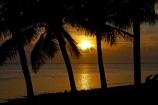 bronze;coast;coastal;coastline;coastlines;coasts;coconut-palm;coconut-palm-tree;coconut-palm-trees;coconut-palms;Coral-Coast;dusk;evening;Fij;Fiji-Islands;foreshore;Korotogo;nightfall;ocean;Pacific;Pacific-Ocean;palm;palm-tree;palm-trees;palms;sea;shore;shoreline;shorelines;shores;Sigatoka;silhouette;silhouettes;sky;South-Pacific;sunset;sunsets;tropical-island;tropical-islands;twilight;Viti-Levu;Viti-Levu-Island;water