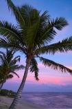coast;coastal;coastline;coastlines;coasts;coconut-palm;coconut-palm-tree;coconut-palm-trees;coconut-palms;Coral-Coast;dusk;evening;Fij;Fiji-Islands;foreshore;Korotogo;nightfall;ocean;Pacific;Pacific-Ocean;palm;palm-tree;palm-trees;palms;pink;sea;shore;shoreline;shorelines;shores;Sigatoka;silhouette;silhouettes;sky;South-Pacific;sunset;sunsets;tropical-island;tropical-islands;twilight;Viti-Levu;Viti-Levu-Island;water