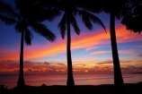 coast;coastal;coastline;coastlines;coasts;coconut-palm;coconut-palm-tree;coconut-palm-trees;coconut-palms;Coral-Coast;dusk;evening;Fij;Fiji-Islands;foreshore;Korotogo;nightfall;ocean;orange;Pacific;Pacific-Ocean;palm;palm-tree;palm-trees;palms;pink;sea;shore;shoreline;shorelines;shores;Sigatoka;silhouette;silhouettes;sky;South-Pacific;sunset;sunsets;tropical-island;tropical-islands;twilight;Viti-Levu;Viti-Levu-Island;water