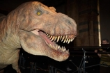 animatronic-models;britain;Cromwell-Rd;Cromwell-Road;Dinosaur;dinosaur-display;dinosaur-displays;dinosaur-exhibit;dinosaur-exhibits;Dinosaur-model;Dinosaur-models;Dinosaurs;england;Europe;G.B.;GB;giant-animatronic-model;great-britain;kingdom;london;model;models;museum;museums;Natural-History-Museum;people;person;SW7;T.-Rex;T.-Rex-display;T.Rex;T.Rex-display;The-Natural-History-Museum;Tyrannosaurus;Tyrannosaurus-model;Tyrannosaurus-rex;Tyrannosaurus-rex-model;U.K.;uk;united;United-Kingdom
