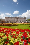 bloom;blooming;blooms;blossom;blossoming;blossoms;Britain;Buckingham-House;Buckingham-Palace;City-of-Westminster;color;colorful;colour;colourful;england;Europe;flower;flower-garden;flower-gardens;flowerbad;flowerbeds;flowers;fresh;G.B.;GB;great-britain;grow;growth;kingdom;london;Memorial-Garden;Memorial-Gardens;palace;palaces;people;person;red;renew;Royal-Parks-of-London;Saint-James-Park;Saint-Jamess-Park;season;seasonal;seasons;spring;springtime;St-James-Park;St-Jamess-Park;St.-James-Park;St.-Jamess-Park;tourism;tourist;tourists;tulip;tulips;U.K.;UK;united;United-Kingdom;Westminster;yellow