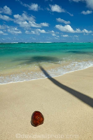 aquamarine;beach;beaches;blue;blue-skies;blue-sky;clean-water;clear-water;cloud;clouds;cobalt-blue;cobalt-ultramarine;cobaltultramarine;coconut;coconut-palm;coconut-palms;coconuts;Cook-Is;Cook-Islands;Pacific;Pacific-Ocean;palm;palm-tree;palm-trees;palms;paradise;Rarotonga;shadow;shadows;simple;South-Pacific;tropcial-water;tropical;tropical-beach;tropical-island;tropical-islands;tropical-palm-tree;turquoise;water-aqua;white-cloud;white-clouds