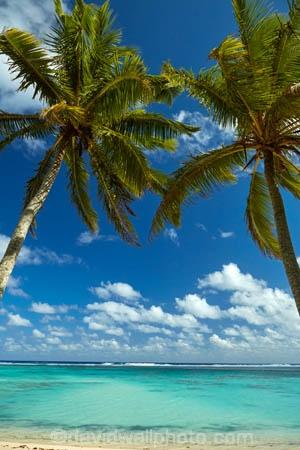 aquamarine;azure;beach;beaches;blue;clean-water;clear-water;cobalt;cobalt-blue;cobalt-ultramarine;cobaltultramarine;Coconut-palm;Coconut-palm-tree;Coconut-palm-trees;Coconut-palms;Coconut-tree;Coconut-trees;Cook-Is;Cook-Islands;frond;fronds;Pacific;palm;palm-frond;palm-fronds;palm-tree;palm-trees;palms;paradise;Rarotonga;South-Pacific;teal;tropical;tropical-beach;tropical-island;tropical-islands;tropical-palm-tree;tropical-paradise;turquoise;ultramarine;water