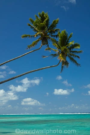 aquamarine;beach;beaches;blue;clean-water;clear-water;cobalt-blue;cobalt-ultramarine;cobaltultramarine;coconut-palm;coconut-palms;Cook-Is;Cook-Islands;ocean;Pacific;Pacific-Ocean;palm;palm-tree;palm-trees;palms;paradise;Rarotonga;sea;South-Pacific;tropcial-water;tropical;tropical-beach;tropical-island;tropical-islands;tropical-palm-tree;turquoise;twin;two