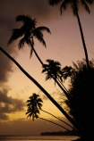beach;beaches;coconut-palm;coconut-palms;Cook-Is;Cook-Islands;dusk;evening;night;night_time;nightfall;ocean;orange;Pacific;Pacific-Ocean;palm;palm-tree;palm-trees;palms;paradise;Rarotonga;sea;South-Pacific;sunset;sunsets;tropical;tropical-island;tropical-islands;tropical-palm-tree;twilight