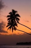 beach;beaches;coconut-palm;coconut-palms;Cook-Is;Cook-Islands;dusk;evening;night;night_time;nightfall;ocean;orange;Pacific;Pacific-Ocean;palm;palm-tree;palm-trees;palms;paradise;Rarotonga;sea;simple;South-Pacific;sunset;sunsets;tropical;tropical-island;tropical-islands;tropical-palm-tree;twilight