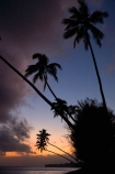 beach;beaches;cloud;clouds;cloudy;coconut-palm;coconut-palms;Cook-Is;Cook-Islands;dusk;evening;night;night_time;nightfall;ocean;Pacific;Pacific-Ocean;palm;palm-tree;palm-trees;palms;paradise;Rarotonga;sea;South-Pacific;sunset;sunsets;tropical;tropical-island;tropical-islands;tropical-palm-tree;twilight