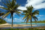 Avana-Harbor;Avana-Harbour;beach;beaches;Cook-Is;Cook-Islands;departure;departure-point;Garden-of-seven-stones;historic;history;Maori;Muri-Lagoon;Pacific;palm;palm-tree;palm-trees;palms;Rarotonga;South-Pacific;tropical;tropical-beach;tropical-island;tropical-islands;tropical-palm-tree