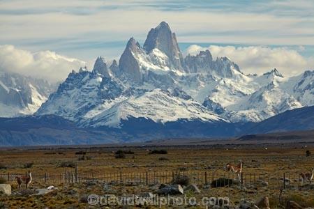 animal;animals;Argentina;Argentine-Patagonia;Argentine-Republic;Cerro-Chaltén;Cerro-Fitz-Roy;El-Chalten;Glacier-National-Park;guanaco;guanacos;lama;Lama-guanicoe;lamas;Latin-America;Los-Glaciares;Los-Glaciares-N.P.;Los-Glaciares-National-Park;Los-Glaciares-NP;Monte-Fitz-Roy;Mount-Fitz-Roy;Mount-Fitzroy;Mt-Fitz-Roy;Mt-Fitzroy;Mt.-Fitz-Roy;Mt.-Fitzroy;national-park;national-parks;NP;park;parks;Parque-Nacional-Los-Glaciares;Patagonia;Patagonian;Patagonian-steppe;Santa-Cruz-Province;South-America;South-Argentina;Southern-Argentina;Sth-America;UN-world-heritage-area;UN-world-heritage-site;UNESCO-World-Heritage-area;UNESCO-World-Heritage-Site;united-nations-world-heritage-area;united-nations-world-heritage-site;widllife;wild-lama;wild-lamas;world-heritage;world-heritage-area;world-heritage-areas;World-Heritage-Park;World-Heritage-site;World-Heritage-Sites