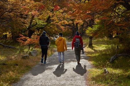 Argentina;Argentine-Patagonia;Argentine-Republic;autuminal;autumn;autumn-colour;autumn-colours;autumnal;beech;beech-tree;beech-trees;beeches;color;colors;colour;colours;deciduous;El-Chalten;fall;Glacier-National-Park;gold;golden;Latin-America;leaf;leaves;lenga;lenga-beech;lengas;Los-Glaciares;Los-Glaciares-N.P.;Los-Glaciares-National-Park;Los-Glaciares-NP;M.R;model-release;model-released;MR;national-park;national-parks;Northofagus;Northofagus-pumilio;NP;orange;park;parks;Parque-Nacional-Los-Glaciares;Patagonia;Patagonian;people;Santa-Cruz-Province;season;seasonal;seasons;South-America;South-Argentina;Southern-Argentina;southern-beech;southern-beeches;Sth-America;tourism;tourist;tourists;travel;tree;trees;UN-world-heritage-area;UN-world-heritage-site;UNESCO-World-Heritage-area;UNESCO-World-Heritage-Site;united-nations-world-heritage-area;united-nations-world-heritage-site;world-heritage;world-heritage-area;world-heritage-areas;World-Heritage-Park;World-Heritage-site;World-Heritage-Sites;yellow