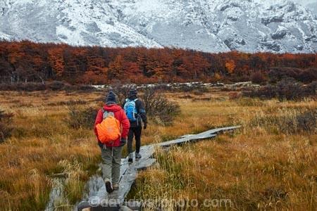Argentina;Argentine-Patagonia;Argentine-Republic;autuminal;autumn;autumn-colour;autumn-colours;autumnal;beech;beech-tree;beech-trees;beeches;boardwalk;boardwalks;cold;color;colors;colour;colours;deciduous;El-Chalten;fall;Glacier-National-Park;gold;golden;hiker;hikers;hiking;hiking-path;hiking-paths;hiking-trail;hiking-trails;Latin-America;leaf;leaves;lenga;lenga-beech;lengas;Los-Glaciares;Los-Glaciares-N.P.;Los-Glaciares-National-Park;Los-Glaciares-NP;M.R.;model-release;model-released;mountain;mountains;MR;national-park;national-parks;Northofagus;Northofagus-pumilio;NP;park;parks;Parque-Nacional-Los-Glaciares;Patagonia;Patagonian;path;paths;pathway;pathways;people;person;route;routes;Santa-Cruz-Province;season;seasonal;seasons;snow;snowy;South-America;South-Argentina;Southern-Argentina;southern-beech;southern-beeches;Sth-America;track;tracks;trail;trails;tramper;trampers;tramping;tramping-trail;tramping-trails;tree;trees;trekker;trekkers;trekking;UN-world-heritage-area;UN-world-heritage-site;UNESCO-World-Heritage-area;UNESCO-World-Heritage-Site;united-nations-world-heritage-area;united-nations-world-heritage-site;walker;walkers;walking;walking-path;walking-paths;walking-trail;walking-trails;walkway;walkways;world-heritage;world-heritage-area;world-heritage-areas;World-Heritage-Park;World-Heritage-site;World-Heritage-Sites;yellow