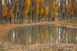 Argentina;Argentine-Patagonia;Argentine-Republic;autuminal;autumn;autumn-colour;autumn-colours;autumnal;color;colors;colour;colours;deciduous;fall;farmyard;farmyards;gold;golden;Latin-America;leaf;leaves;National-Route-40;Patagonia;Patagonian;poplar;poplar-tree;poplar-trees;poplars;Route-40;Route-Forty;Ruta-40;Ruta-Nacional-40;Santa-Cruz-Province;season;seasonal;seasons;South-America;South-Argentina;Southern-Argentina;Sth-America;stockyard;stockyards;travel;tree;trees;yellow