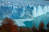 Argentina;Argentine-Patagonia;Argentine-Republic;Argentino-Lake;autuminal;autumn;autumn-colour;autumn-colours;autumnal;beech;beech-tree;beech-trees;beeches;boardwalk;boardwalks;Canal-de-los-Tempanos;cold;color;colors;colour;colours;crevasse;crevasses;deciduous;fall;Glaciar-Perito-Moreno;glacier;glacier-face;Glacier-National-Park;glacier-terminal-face;glacier-terminus;glaciers;gold;golden;ice;Iceberg-Channel;icefield;icefields;icy;Lago-Argentino;Latin-America;leaf;leaves;lenga;lenga-beech;lengas;lookout;lookouts;Los-Glaciares;Los-Glaciares-N.P.;Los-Glaciares-National-Park;Los-Glaciares-NP;Magellanes-Peninsula;national-park;national-parks;Northofagus;Northofagus-pumilio;NP;orange;park;parks;Parque-Nacional-Los-Glaciares;Patagonia;Patagonian;Peninsula-Magellanes;people;Perito-Moreno;Perito-Moreno-Glacier;person;Santa-Cruz-Province;season;seasonal;seasons;South-America;South-Argentina;Southern-Argentina;southern-beech;southern-beeches;Sth-America;terminal-face;terminus;tourism;tourist;tourists;travel;tree;trees;UN-world-heritage-area;UN-world-heritage-site;UNESCO-World-Heritage-area;UNESCO-World-Heritage-Site;united-nations-world-heritage-area;united-nations-world-heritage-site;viewing-platform;viewing-platforms;walkway;walkways;world-heritage;world-heritage-area;world-heritage-areas;World-Heritage-Park;World-Heritage-site;World-Heritage-Sites;yellow