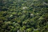 aerial;aerial-image;aerial-images;aerial-photo;aerial-photograph;aerial-photographs;aerial-photography;aerial-photos;aerial-view;aerial-views;aerials;Brasil;Brazil;Cataratas-del-Iguazú;environment;forest;forests;green;Iguacu-Falls;Iguassu-Falls;Iguazu-Falls;Iguazú-Falls;Iguaçu-Falls;Latin-America;lush;national-park;national-parks;Parana-State;Paraná;Paraná-State;rain-forest;rain-forests;rain_forest;rain_forests;rainforest;rainforests;South-America;Sth-America;The-Iguazu-Falls;tree;trees