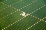 aerial;aerial-image;aerial-images;aerial-photo;aerial-photograph;aerial-photographs;aerial-photography;aerial-photos;aerial-view;aerial-views;aerials;agricultural;agriculture;arid;barren;country;countryside;crop;crops;desert;deserts;dry;farm;farming;farmland;farms;field;fields;green;horticulture;Ica;Ica-Region;Latin-America;Peru;Peruvian-Desert;plantation;plantations;Republic-of-Peru;rural;South-America;Sth-America;vineyard;vineyards