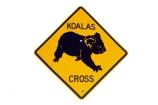 australasia;Australasian;Australia;australian;Koala;Koala-Cross;Koala-Crossing;Koala-Crossing-Sign;Koala-Warning-Sign;koalas;Road;road-sign;road-signs;road_sign;road_signs;roads;roadsign;roadsigns;sign;signs;symbol;symbols;tranportation;transport;travel;warn;yellow;cutout
