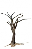 900-year-old-tree;Africa;dead;Deadvlei;desert;Namibia;Southern-Africa;tree-trunk;tree;trunk;cutout;cut;out